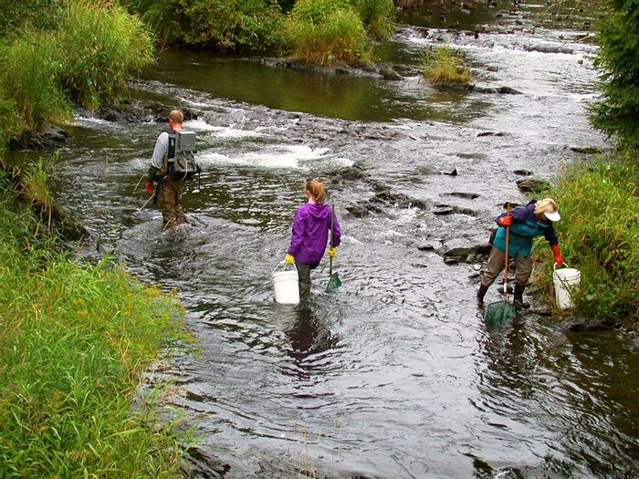 Checking stream health. Photo: Oceans Ltd.