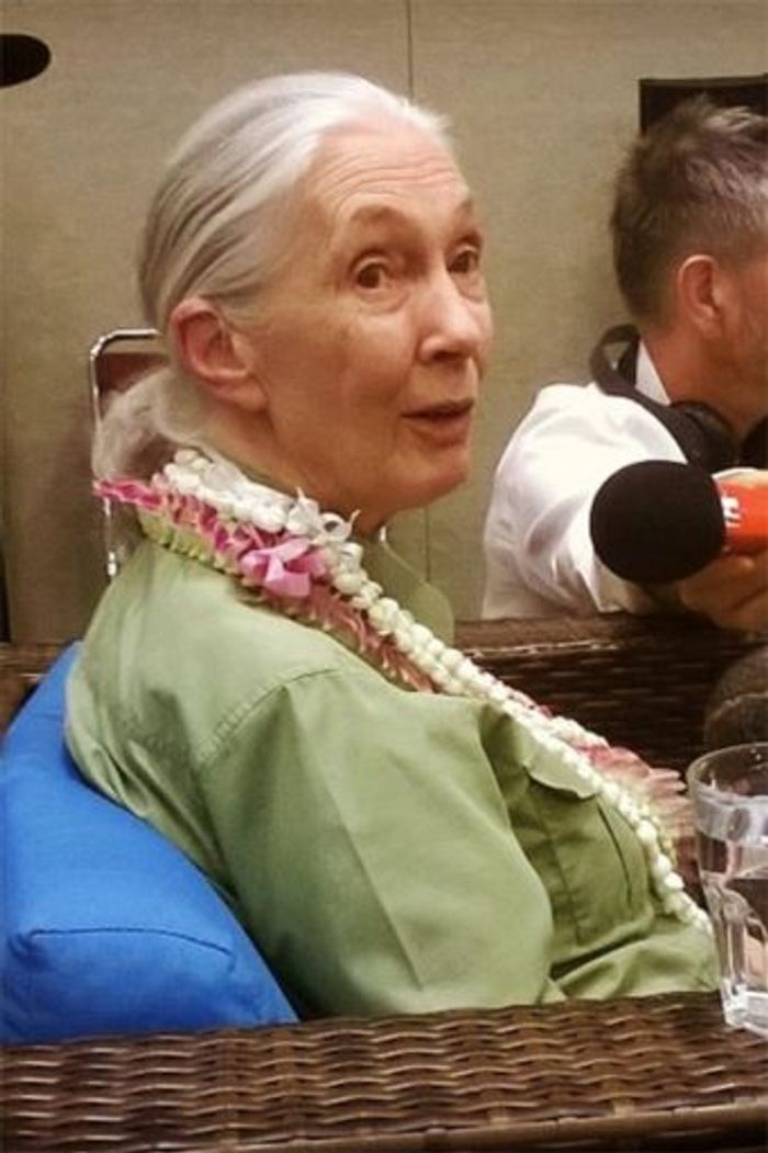 Jane Goodall during a World Conservation Congress press conference. Photo: Mongabay