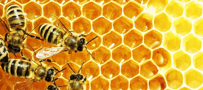 Honeybees work harder just before it's going to rain, according to a new study.