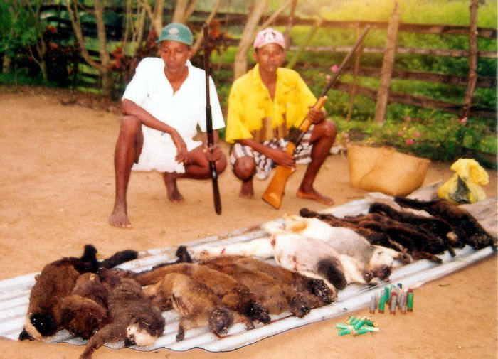 Bushmeat hunting is unsustainable.
