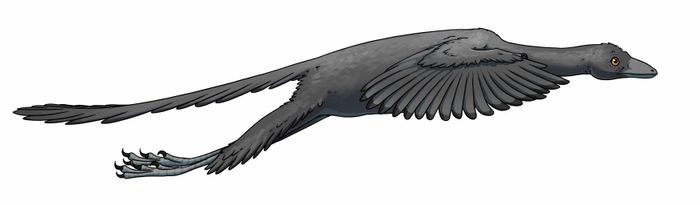 An artist's impression of Archaeopteryx, the active flight-capable dinosaur mentioned in the study.