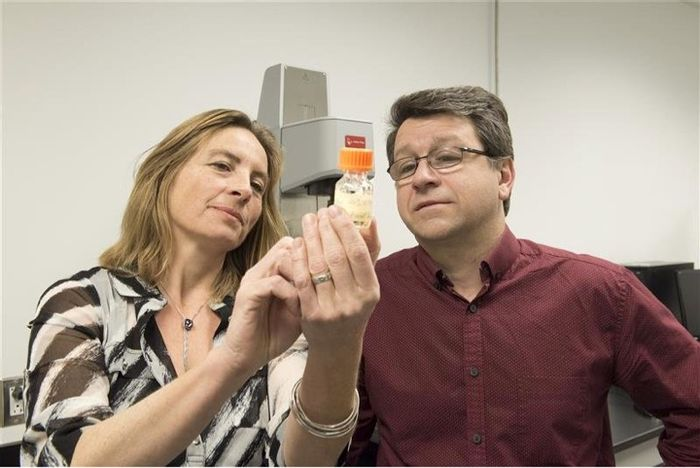 Researchers examine the injectable cancer-killing gel