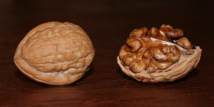 What Walnuts Can Do For Colon Cancer Cancer