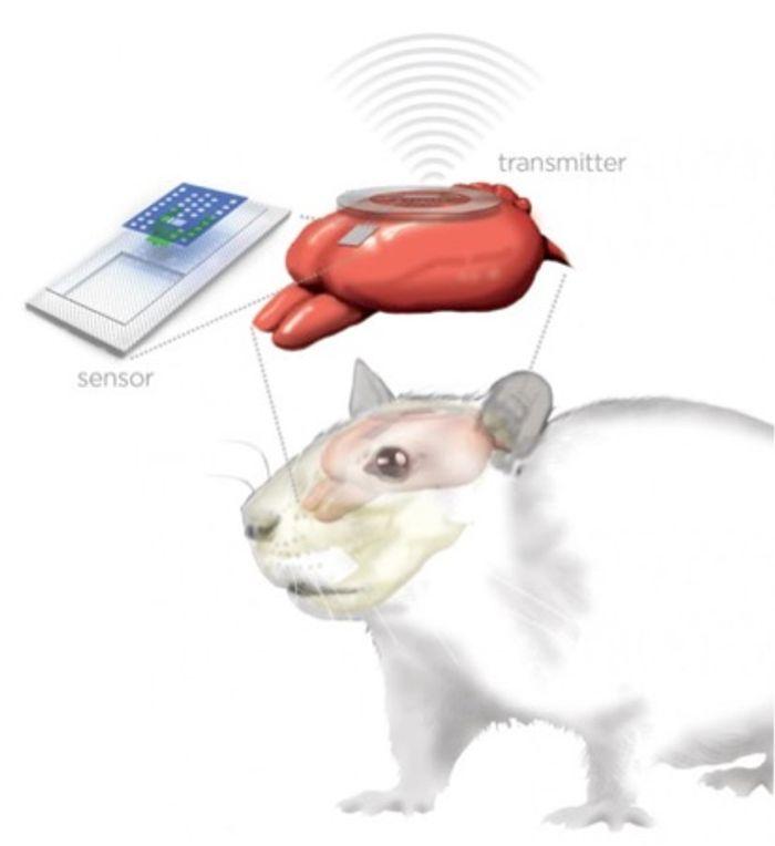 Tiny brain sensors