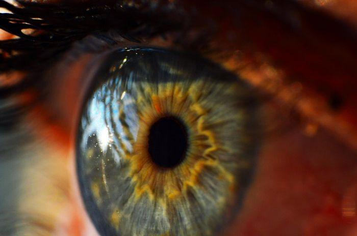 Retina exam may detect Parkinson's before symptoms appear | Image: pixabay.com