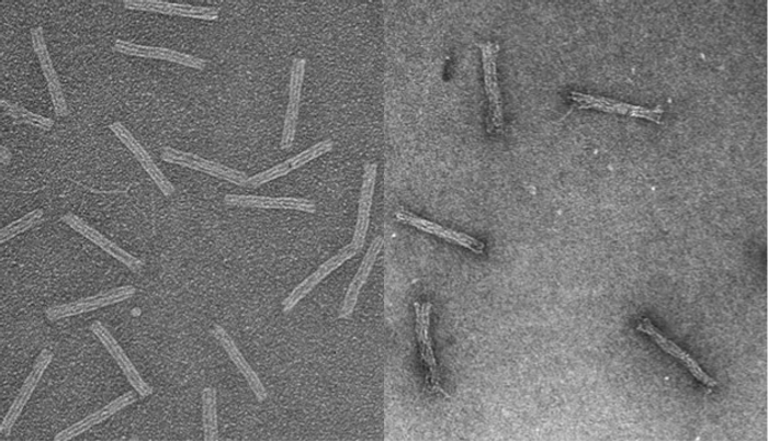 "Cancer drugs hidden inside DNA ""Trojan horses"""