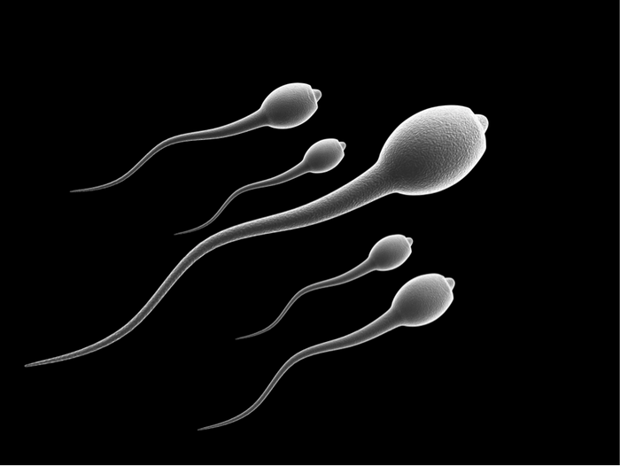 Scientists discover new ways to slow down sperm