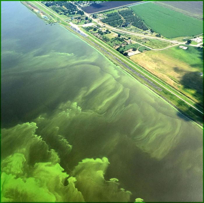 A toxic algal bloom caused by agriculture runoff. Photo: USGS