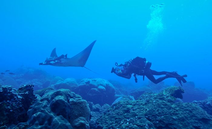 A diver gets a closer look at a juvenile manta ray in the nursery.