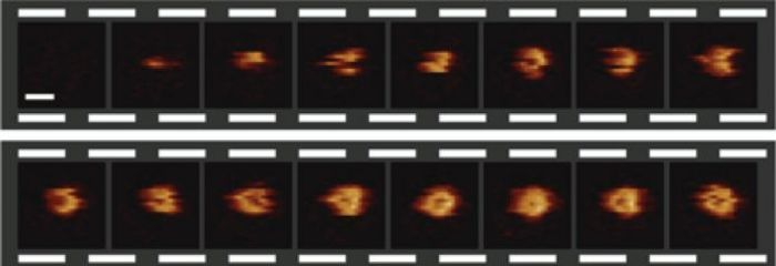 A video sequence of the formation of a hole in a bacterial surface, recorded at 6.5 seconds per frame. The scale bar (see first frame) corresponds to 30 nanometers. / Credit: Edward S. Parsons et al.