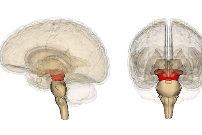 Lab grown brain tissue could help scientists understand Parkinson's disease