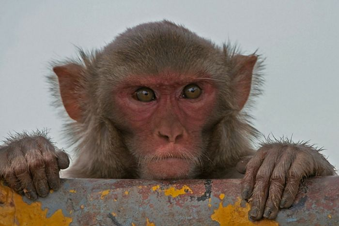 Monkeys can learn to type