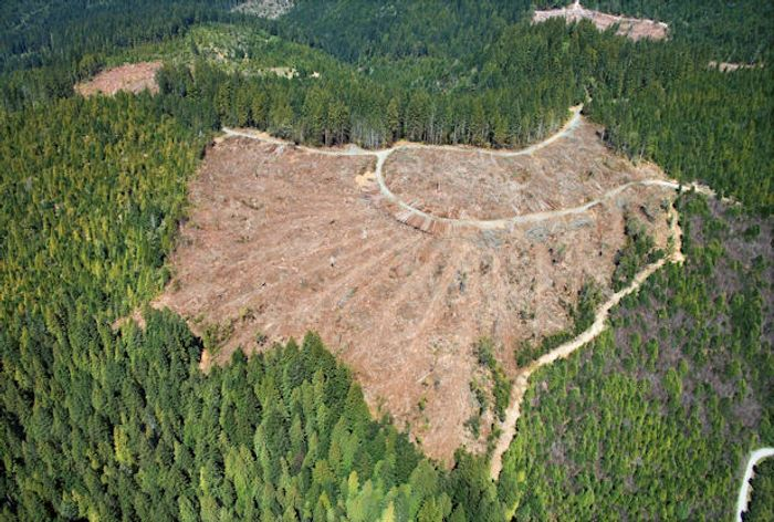 Norway, Britain and the US join hands to limit deforestation for agriculture. Photo: news.softpedia.com