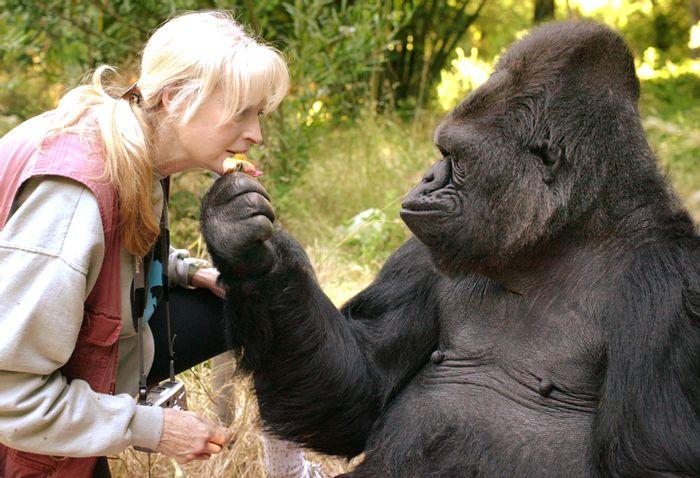 Koko with one of her caretakers.