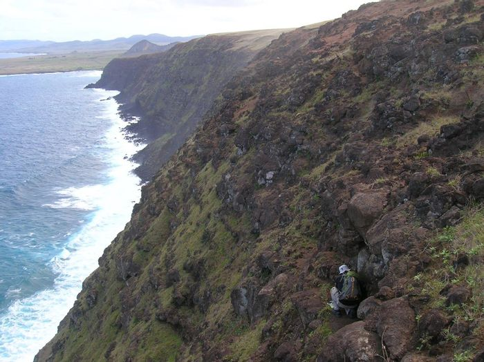 Searching cliff faces for native insects along the southern coast of Poike Volcano. (Credit: Rafael Rodriguez Brizuela)