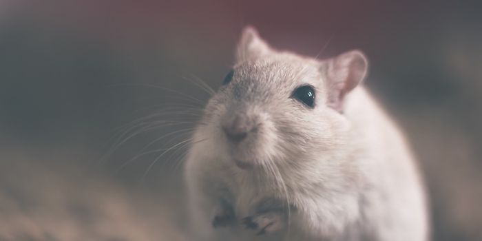 Rats don't seem to like causing pain to others.