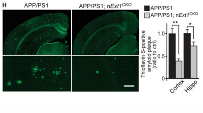 Quantification of Thioflavin-S stained amyloid plaques.