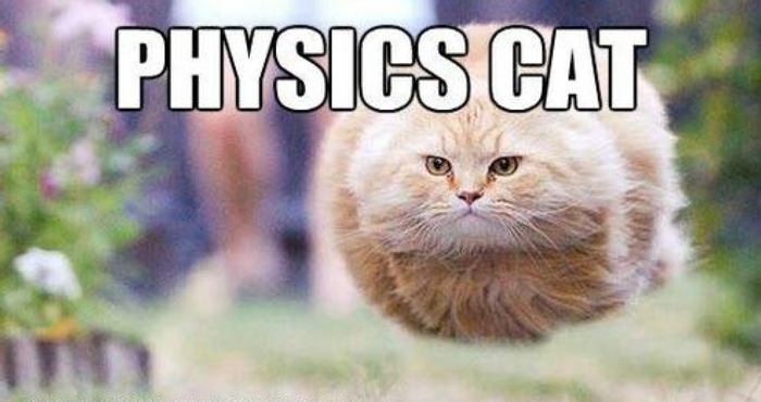 Do cats really understand the laws of physics?