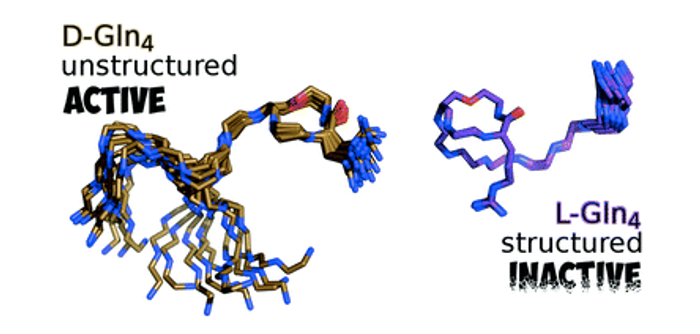 Certain residues maintain a reasonably unstructured teixobactin which is imperative for biological activity / Credit: Chemical Communications