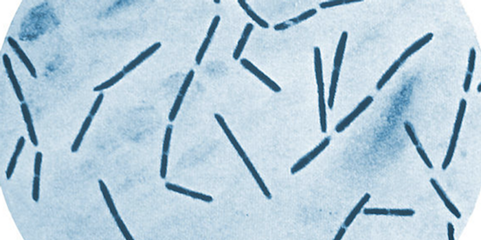 Clostridium septicum bacteria. / Credit: Centers for Disease Control and Prevention's Public Health Image Library