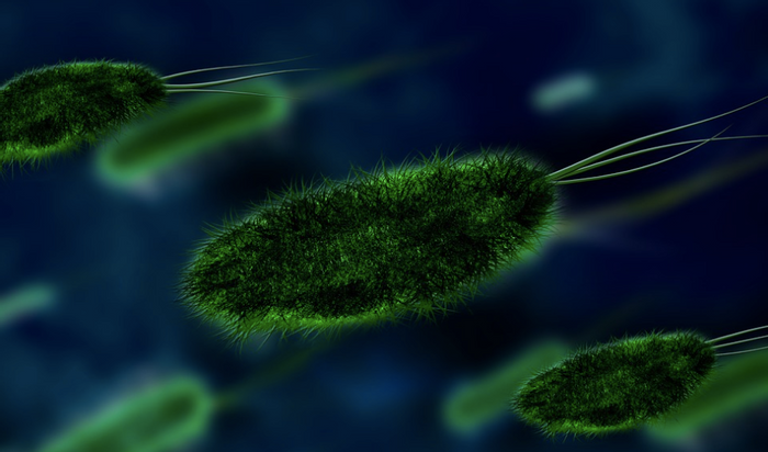 Some gut microbes can be very beneficial to our health / Image credit: Maxpixel
