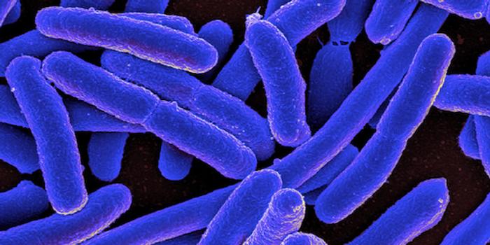 E. coli bacteria / Credit: NIAID