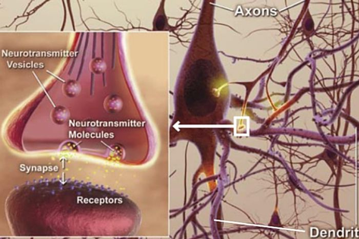 Capturing synaptic activity with new imaging