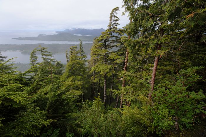 Tongass National Forest, in all it's glory. Photo: Taxpayers for Common Sense