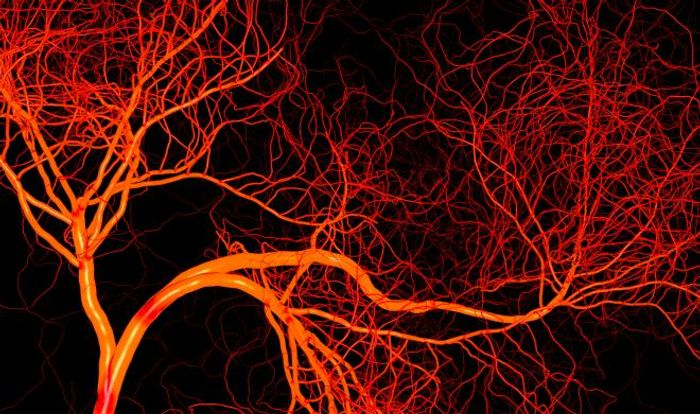 Credit: The Angiogenesis Foundation