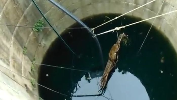 A leopard in a well in India stuggles to stay on a platform lowered by rescue teams.