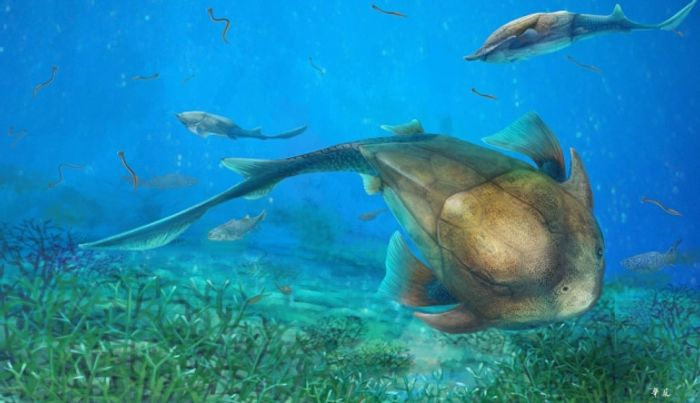 An artist's rendition of the Qilinyu, a type of placoderm that existed 423 million years ago.