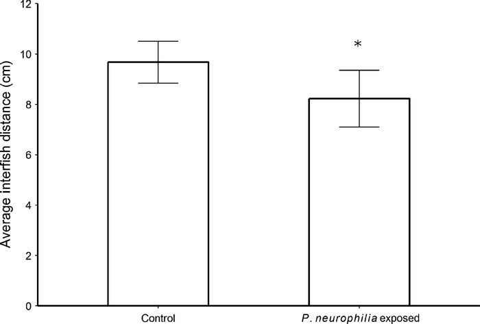 Effects of Pseudoloma neurophilia exposure on shoaling behaviour of zebrafish. Exposure to P. neurophilia significantly decreased the average interfish distance with 12 shoals (tanks), six exposed and six controls. *P = 0.026, U-test. / Credit: Journal of Fish Diseases