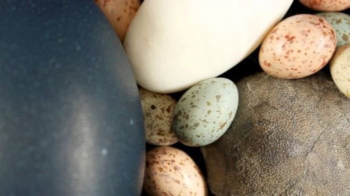Bird eggs come in all kinds of colors, shapes, and sizes, and dinosaur eggs probably did too.