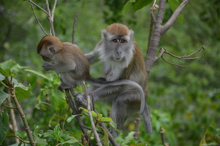 Some macaques are attributing an old behavior to a completely new food source, highlighting their ingenuity.