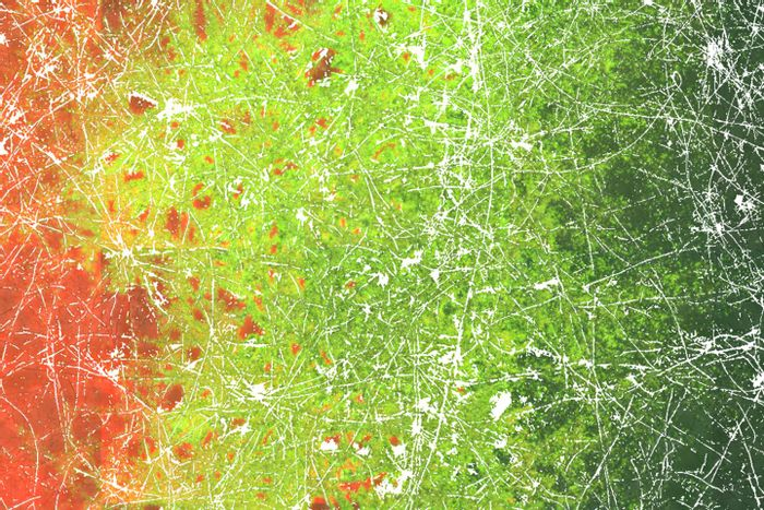 Micrograph visualising the distribution of transconjugant bacteria (in green) along a hyphal network (in white). Transconjugant bacteria are formed by direct contact and horizontal gene transfer of differing bacteria (in red and black) invading the hyphae from the right and the left side, respectively. /Credit: Berthold et al. 2016 in Scientific Reports