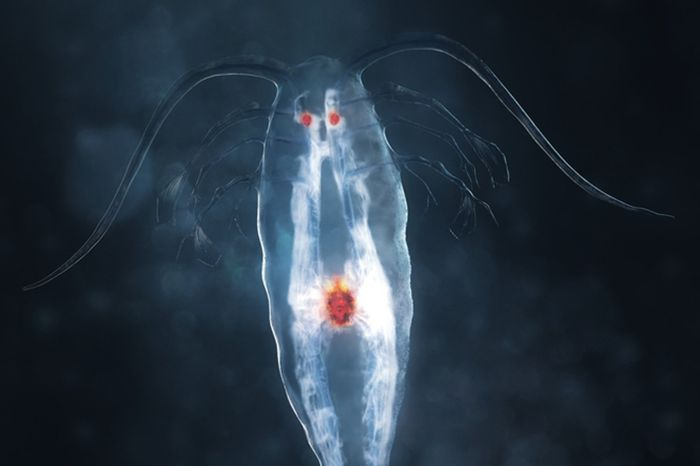 bioluminescent organism, credit: USC