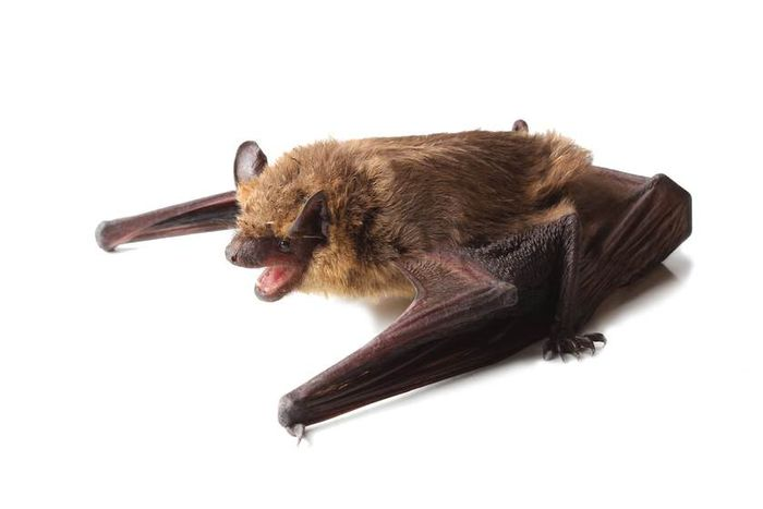 Researchers identified a new bat herpes virus.