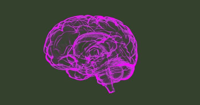 Understanding normal brain function will help us develop better treatments for diseases of the brain / Image credit: Pixabay