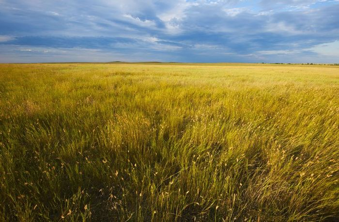 Grasslands come in many forms and are present on all continents, except Antarctica. Photo: ThoughtCo