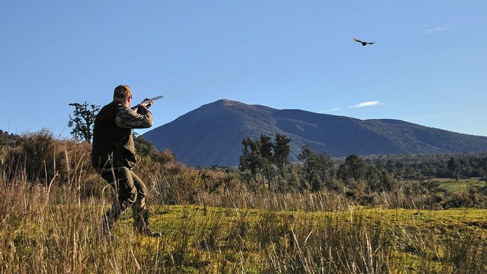 Hunting may actually be making birds smarter by eliminating the less intelligent ones.