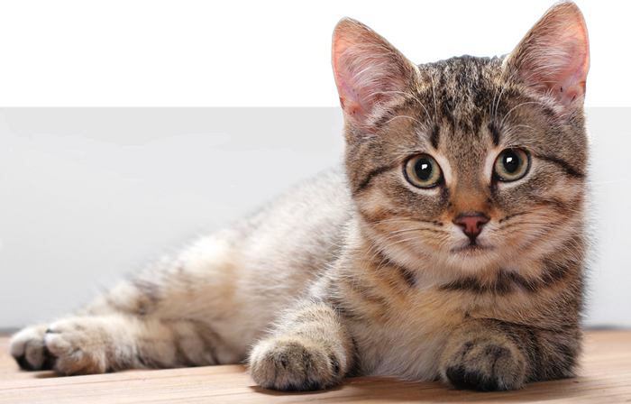 Cats are living longer than ever before, and modern medicine might be the reason why.