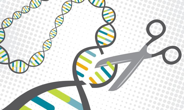 A CRISPR protein targets specific sections of DNA and cuts them. Scientists have turned this natural defense mechanism in bacteria into a tool for gene editing. / Credit: Jenna Luecke and David Steadman/Univ. of Texas at Austin