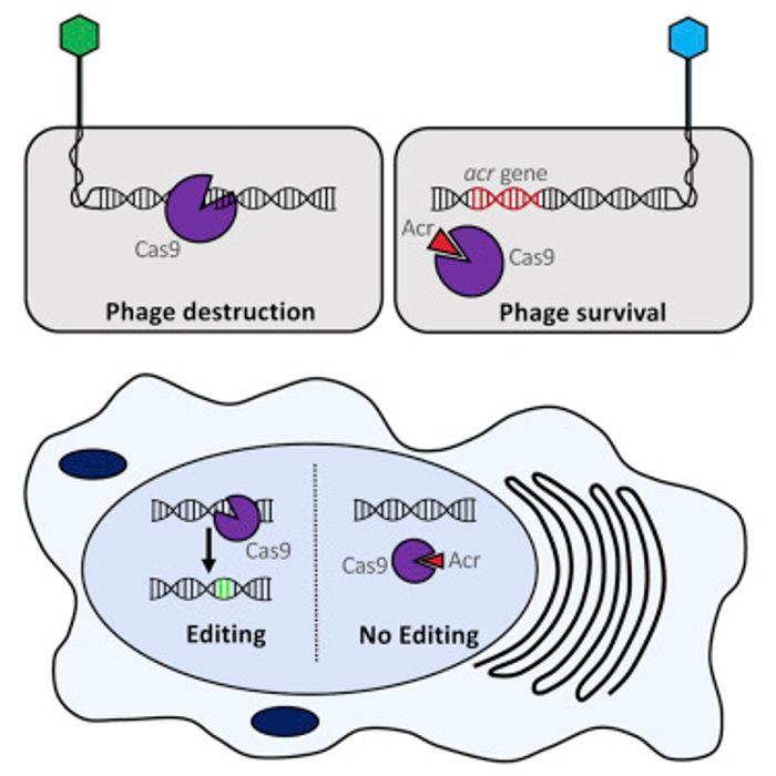 Pawluk et al Cell 2016