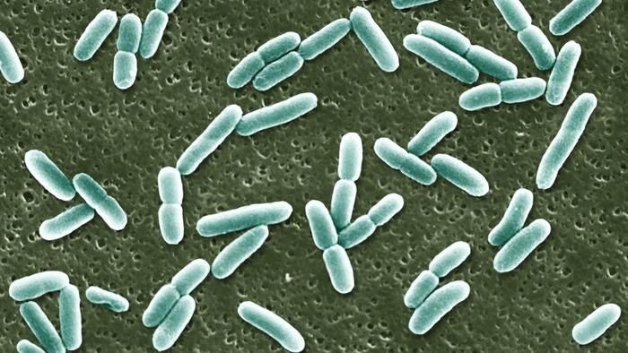 E. coli is commonly used in research.