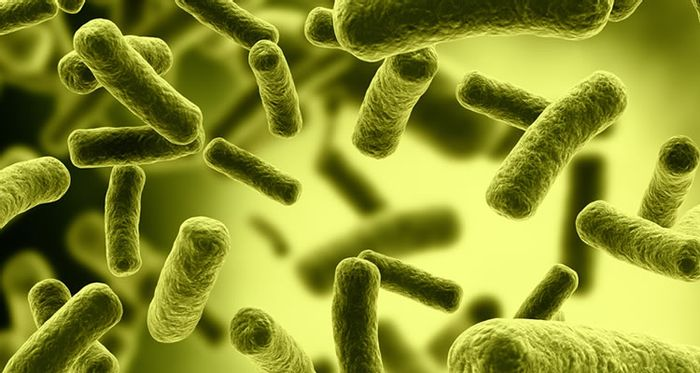 Researchers engineered E. coli to sense inflammation.