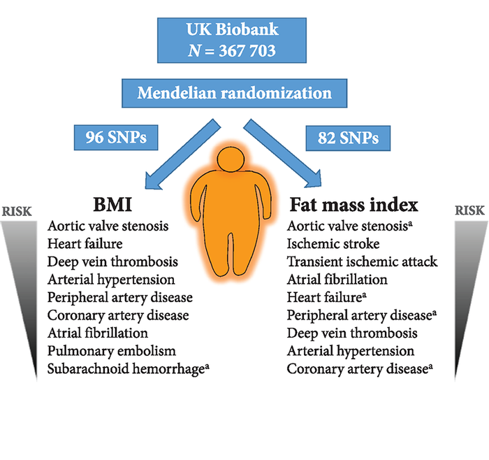 Image via European Heart Journal: Observed associations of BMI and fat mass index with cardiovascular conditions in UK Biobank. aSignificant association at the P < 0.05 level; all other associations are significant at a Bonferroni threshold of P < 3.6 × 10−3 (corrected for 14 outcomes).