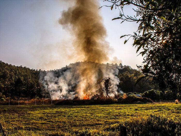 Researchers say invasive grasses are up to tripling the threat of wildfires in some regions. Photo: Pixabay