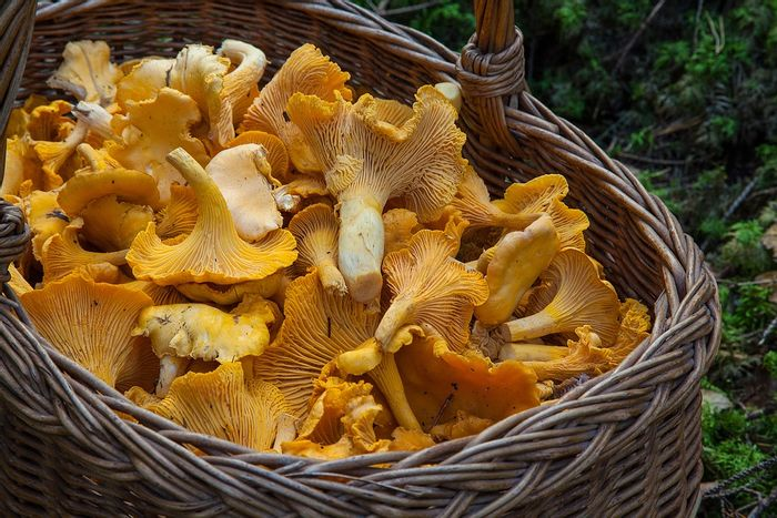 Can eating mushrooms reduce the risk of prostate cancer? Photo: Pixabay
