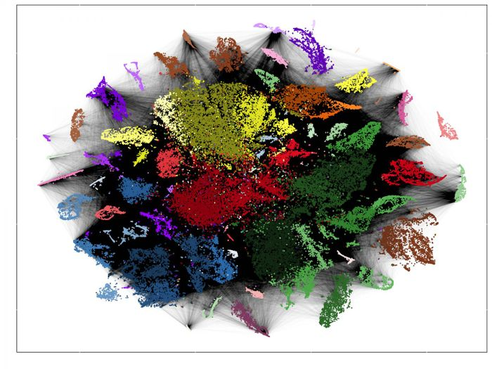 Technologies such as RNA sequencing show which genes are translated in each individual cell. Using similar expression profiles, they were sorted by colour. The black lines symbolize a common origin of the cells. From these data, the researchers traced the cell lineages. / Credit: Picture: Junker Lab, MDC