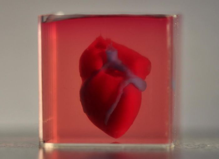 A 3D-printed, small-scaled human heart engineered from the patient's own materials and cells. / Credit: Advanced Science. © 2019 The Authors.